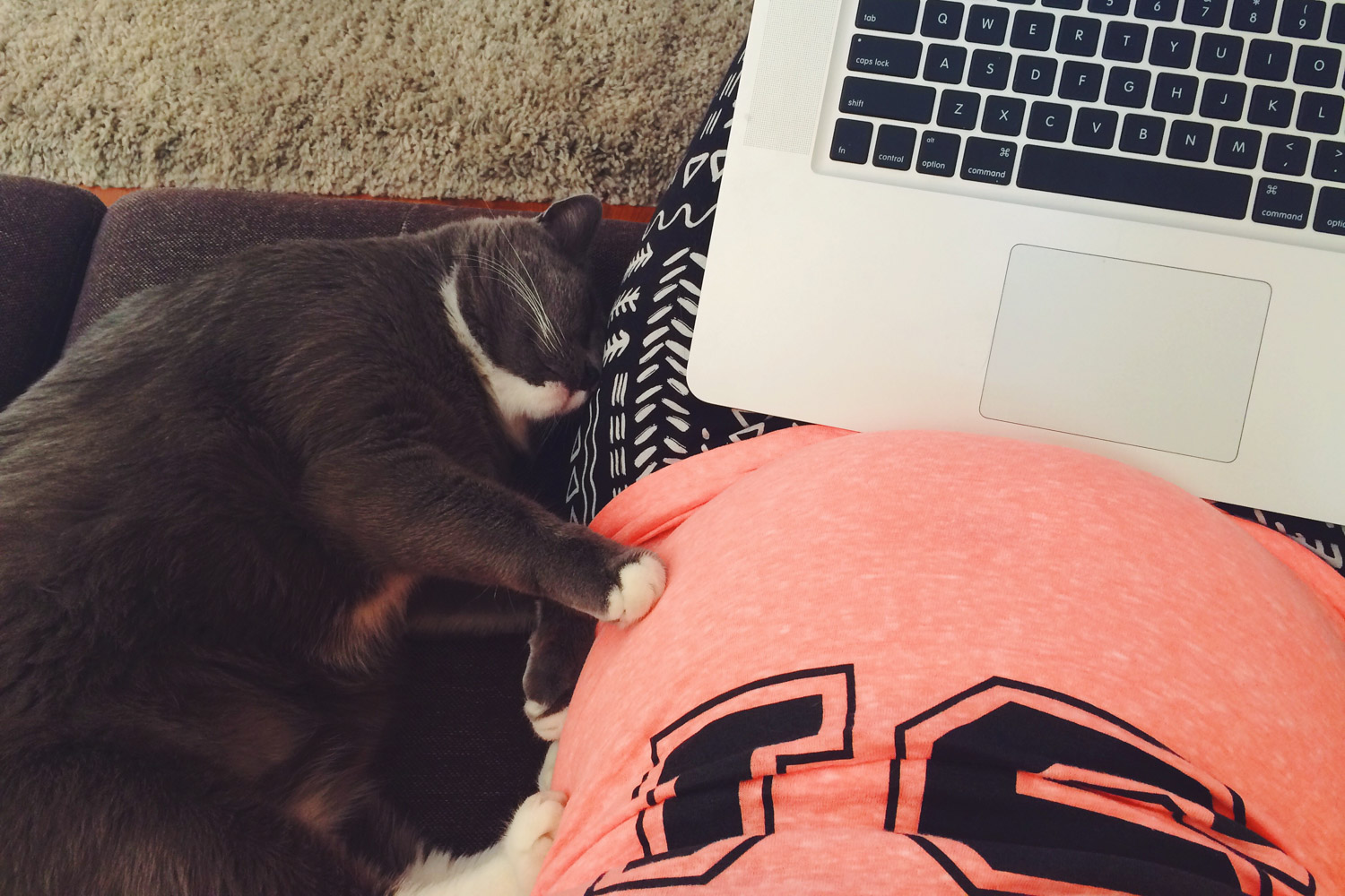 Pregnant mother working with laptop and cat curled up alongside.